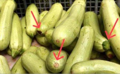 Как выбирать кабачки