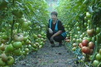 Секретный бальзам ДЛЯ РОСТА помидоринок!