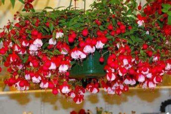 5 бабушкиных советов для цветов 1