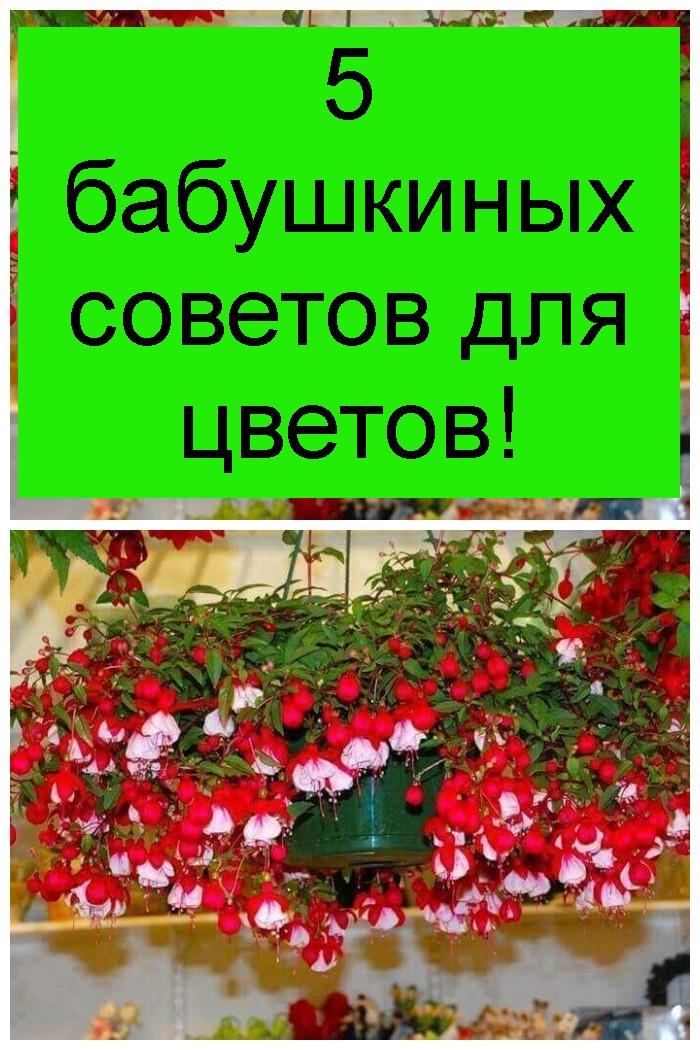 5 бабушкиных советов для цветов 4