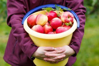 Ведро с яблоками. Замечательная притча, которую хочется цитировать 1